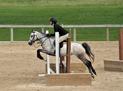 Partbred Connemara Show Pony For Sale